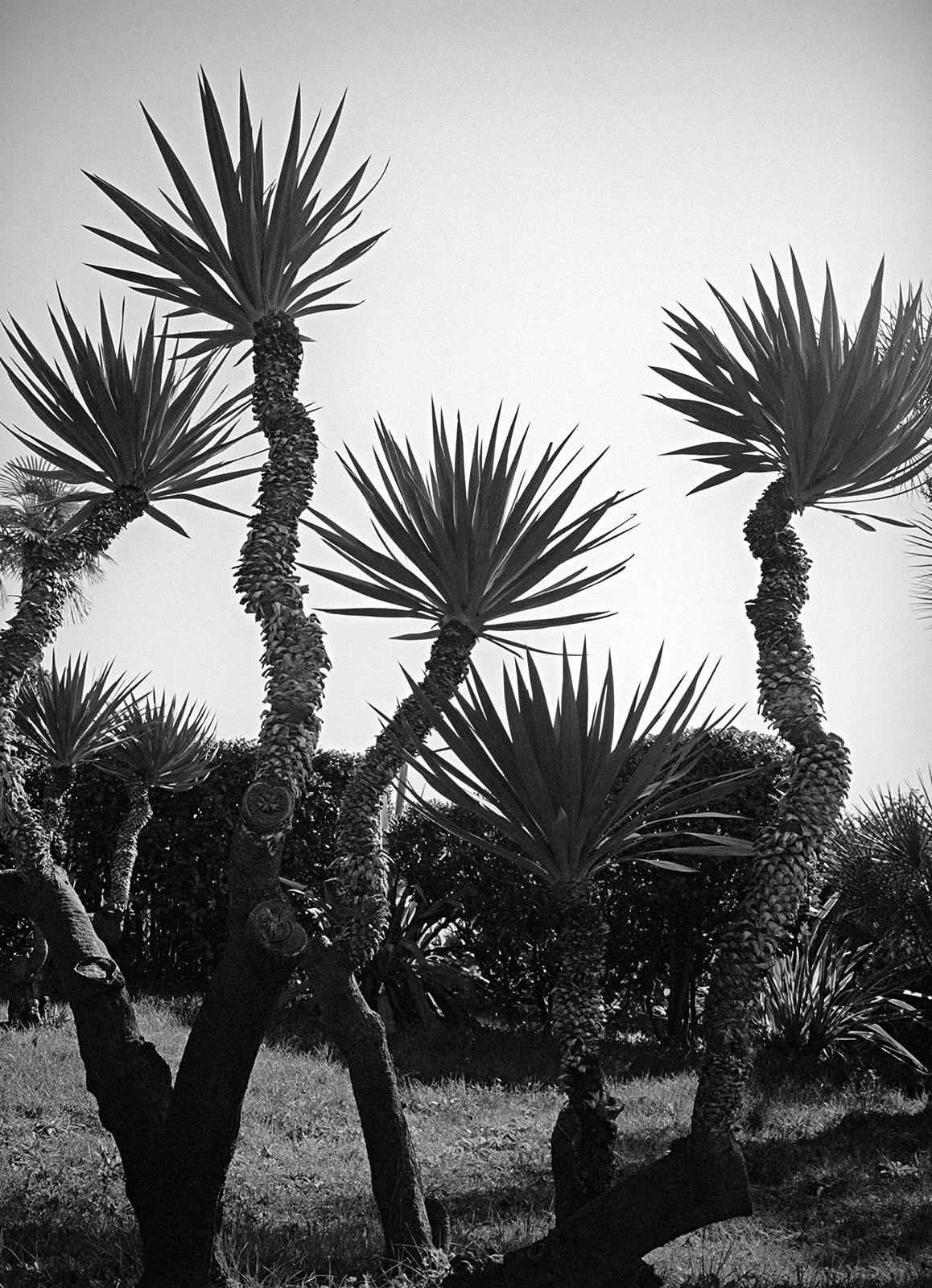 Sculptured plants