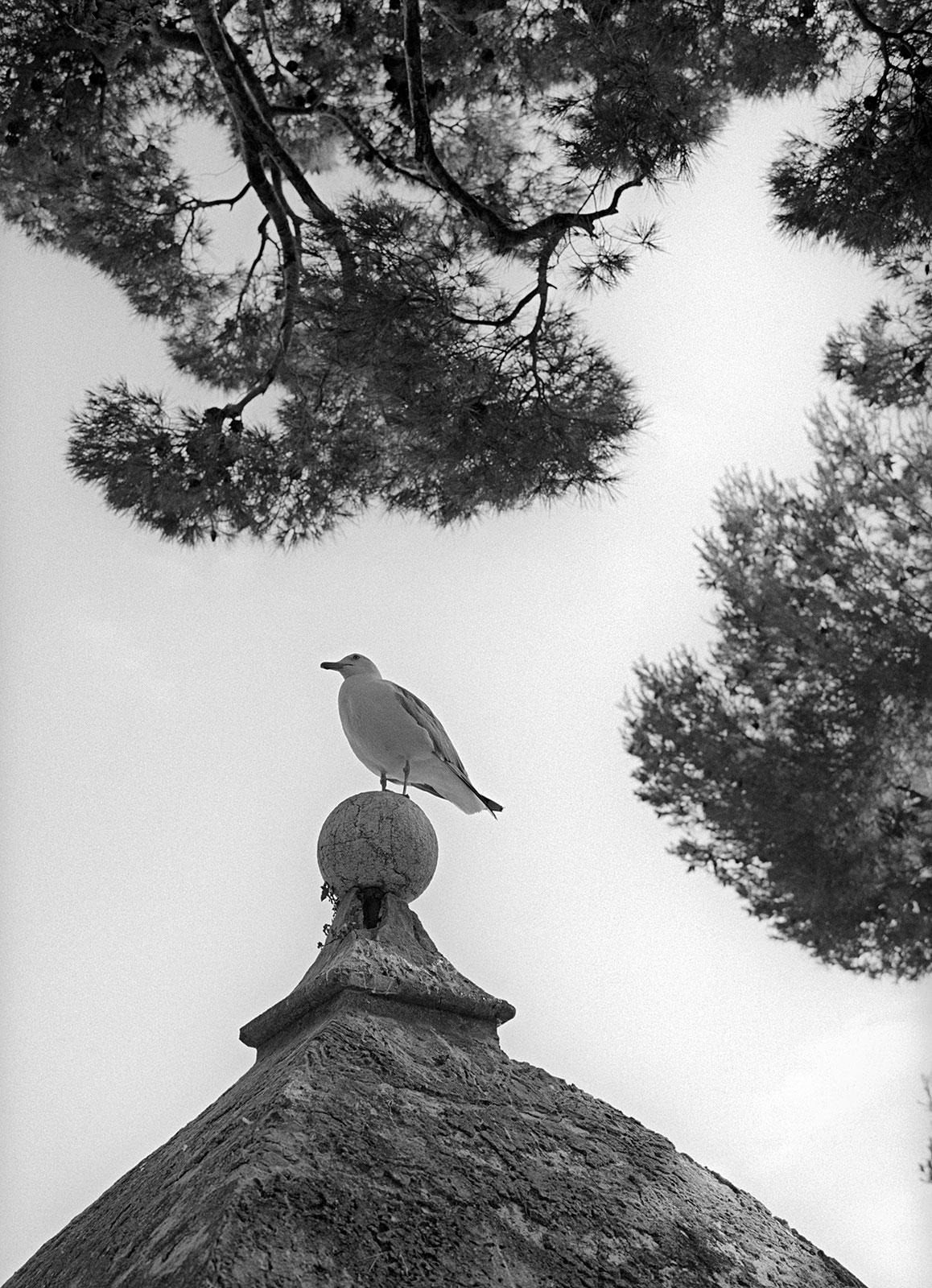 Monaco is a birdland